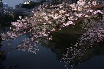 千代田桜まつり(24).jpg