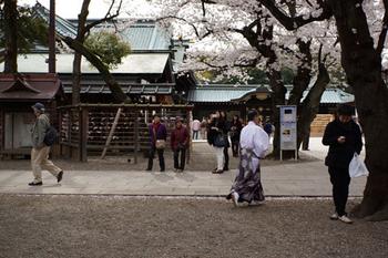 千代田桜まつり(36).jpg