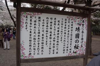 千代田桜まつり(38).jpg