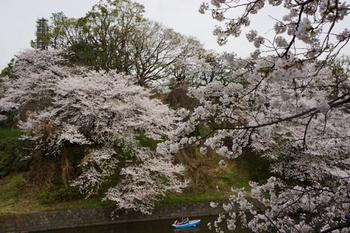 千代田桜まつり(45).jpg