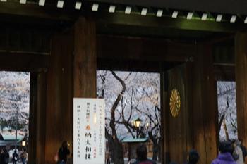 千代田桜まつり(6).jpg