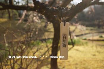 小石川後楽園(13).jpg