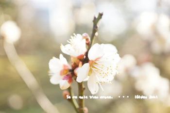 小石川後楽園(14).jpg