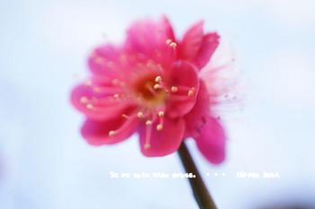 小石川後楽園(17).jpg