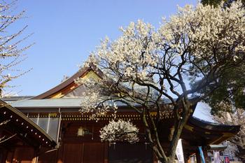 梅祭り(16).jpg