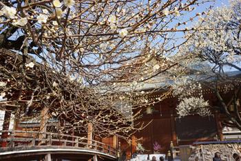 梅祭り(9).jpg