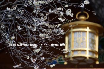 湯島天神の梅(12).jpg