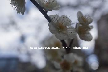 湯島天神(5).jpg