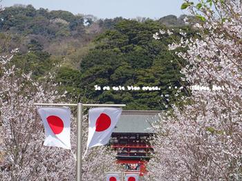 鎌倉の桜2016(11).jpg