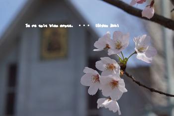 鎌倉の桜2016(8).jpg