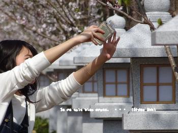 鎌倉の桜2016(9).jpg