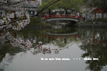 鎌倉の桜2018(23).jpg