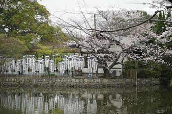 鎌倉の桜2018(26).jpg