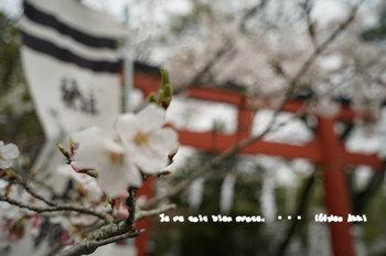 鎌倉の桜2018(28).jpg