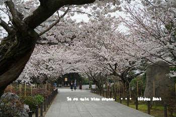 鎌倉の桜2018(35).jpg