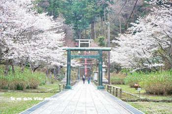 鎌倉の桜2018(43).jpg