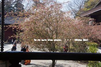 鎌倉の桜(11).jpg
