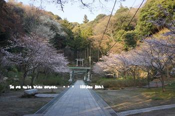 鎌倉の桜(32).jpg