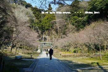 鎌倉桜2017(25).jpg