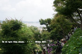 鎌倉紫陽花2014(15).jpg