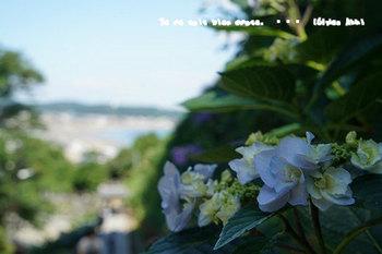 鎌倉紫陽花2018(16).jpg