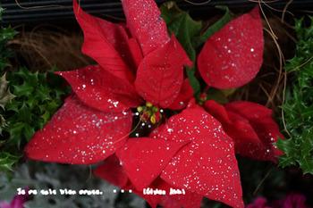 クリスマス 2013(2).jpg