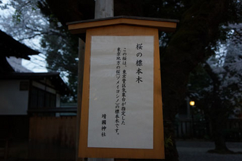 千代田桜まつり(8).jpg