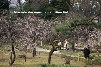 小石川後楽園(11).jpg
