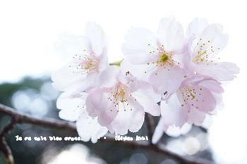 小石川後楽園(4).jpg