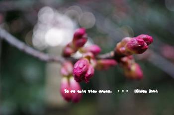 小石川後楽園(5).jpg