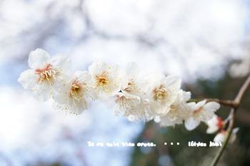 小石川後楽園(9).jpg