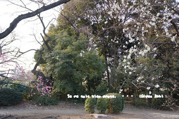 新宿御苑(23).jpg