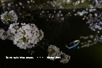 春爛漫2014 (12).jpg