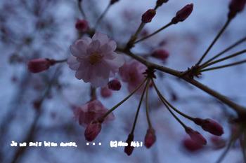 春爛漫2014 (19).jpg