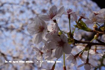春爛漫2014 (24).jpg