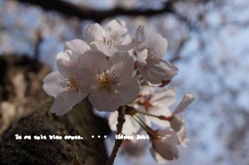 春爛漫2014 (25).jpg