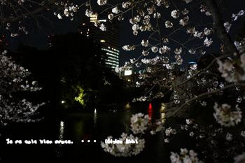 春爛漫2014(13).jpg
