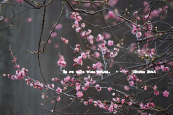 湯島天神の梅(10).jpg