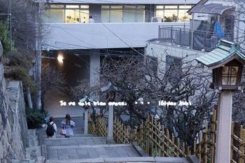 湯島天神の梅(18).jpg
