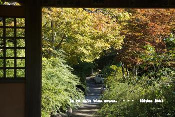 秋の鎌倉(25).jpg