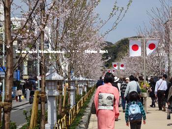 鎌倉の桜2016(10).jpg