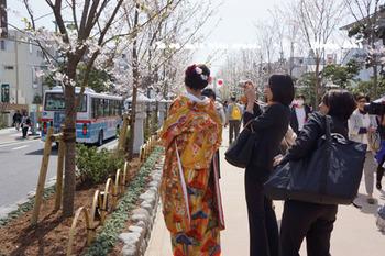 鎌倉の桜2016(7).jpg