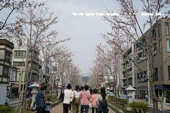 鎌倉の桜2018(13).jpg