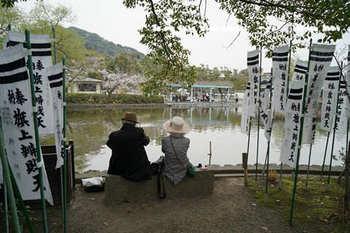 鎌倉の桜2018(29).jpg