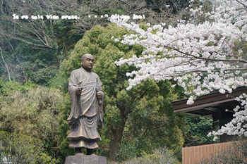 鎌倉の桜2018(9).jpg