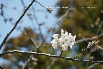 鎌倉の桜2019(14).jpg