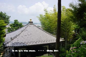 鎌倉紫陽花2014(11).jpg
