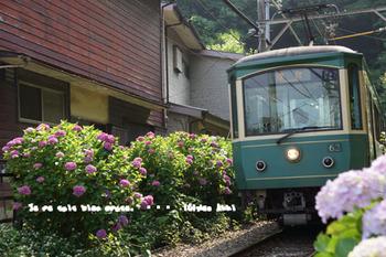 鎌倉紫陽花2014(23).jpg