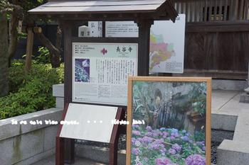 鎌倉紫陽花2014(6).jpg